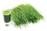 Wheatgrass E1458748298212