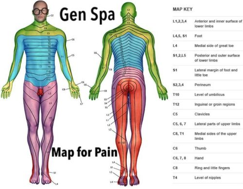 Dermatome Chart of the Human Body to locate the Source of Pain | Gen Spa